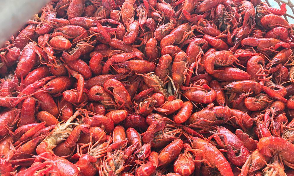 Many cooked crawfish